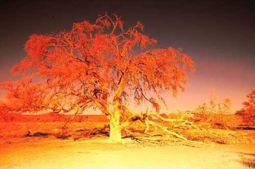 arbre en feu