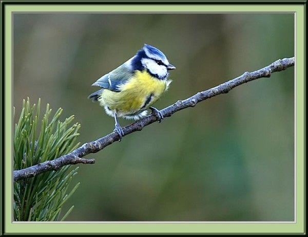 l oiseau
